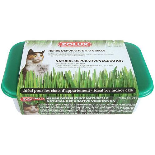 法國 Zolux 貓草種植套裝