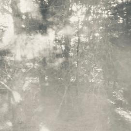 arboreal: impression 2