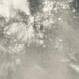 arboreal: impression 5