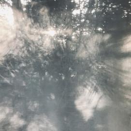 arboreal: impression 9