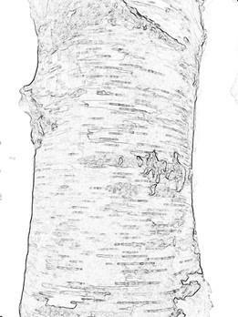 arboreal:constant renewal 1