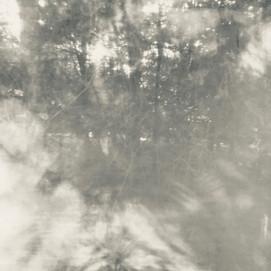 arboreal: impression 3