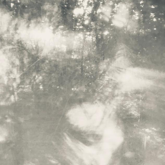 arboreal: impression 4