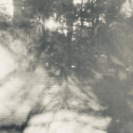 arboreal: impression 8