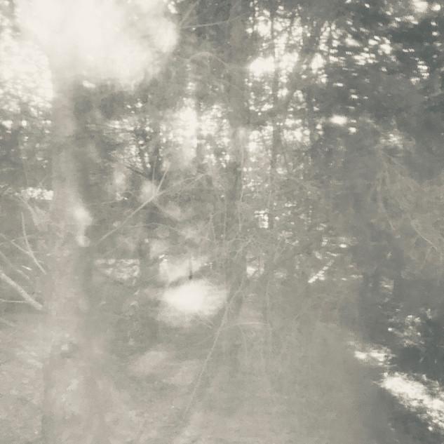 arboreal: impression 6
