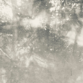 arboreal: impression 7