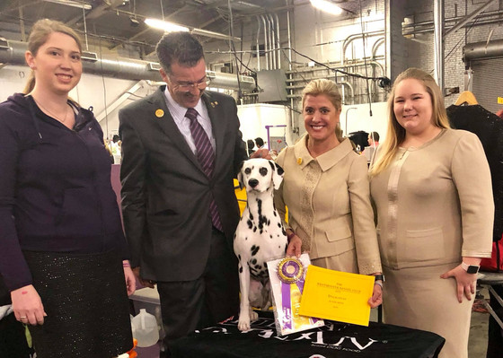 Westminster 2018 - May Best of Breed!