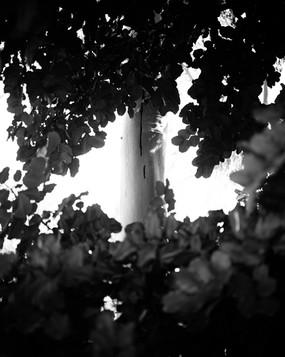 tree-drip-double-size.jpg