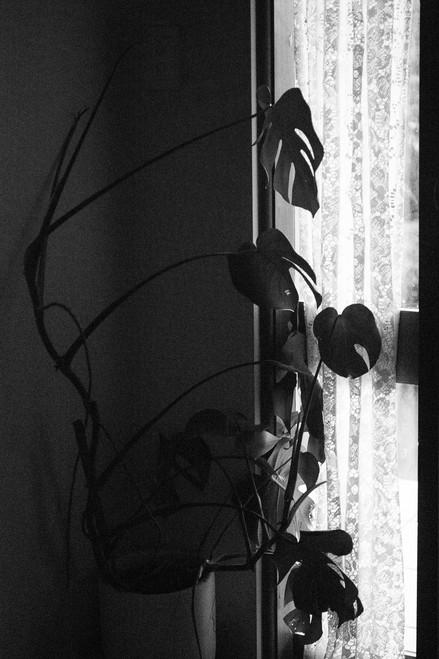 liam plant screen-4.jpg