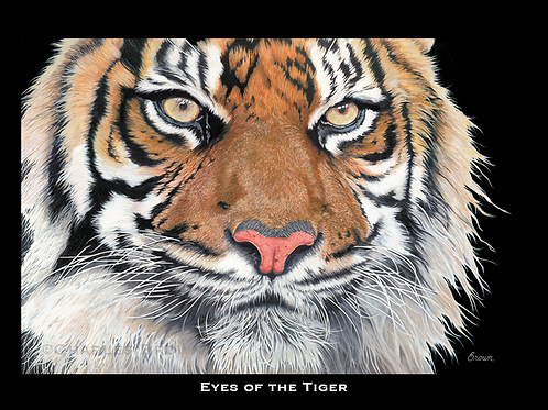 """Eyes of the Tiger"" - 16"" x 20"" Single Matte Giclee Print"