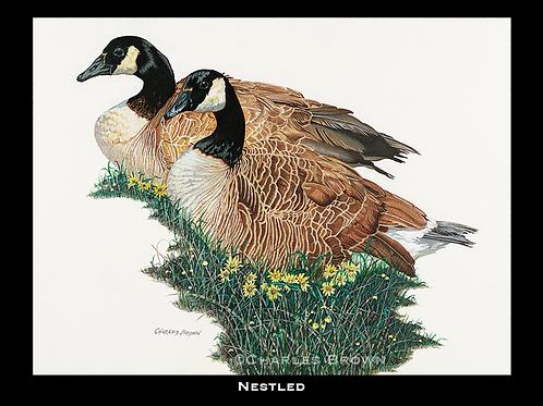 """""""Nestled"""" - 18"""" x 24"""" Original Acrylic"""