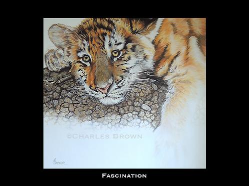 """Fascination"" - 30"" x 30"" Original Acrylic"