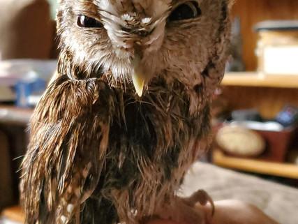 Welcome to our Nebraska Bird Month Partnership Blog