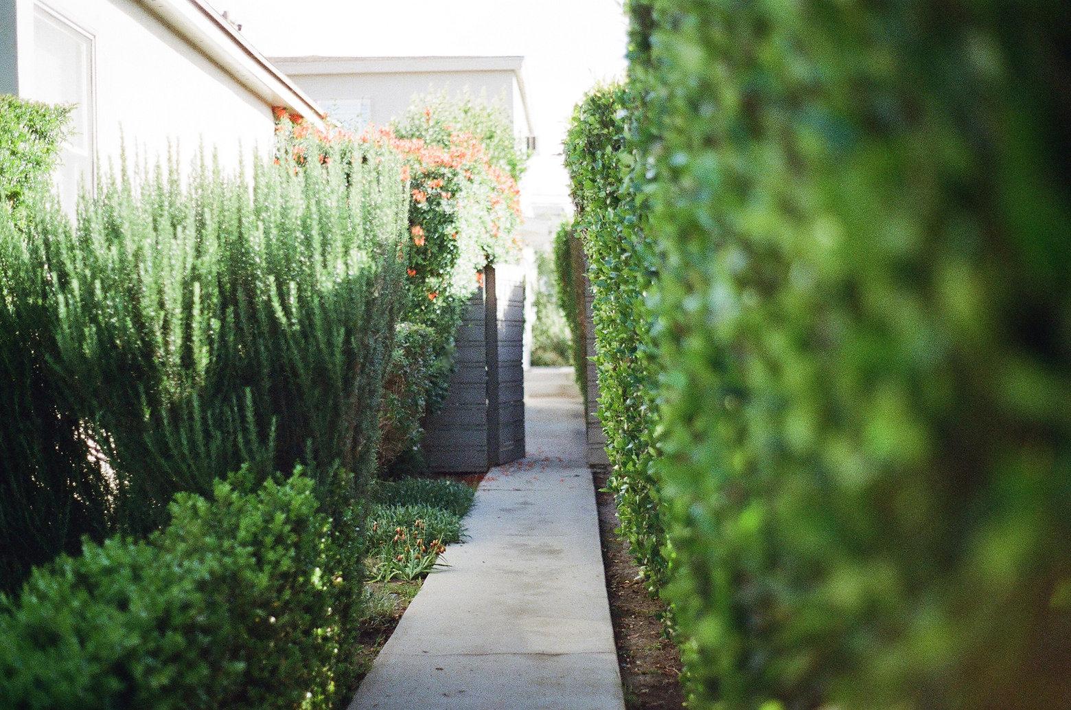 garden-way-2631.jpg
