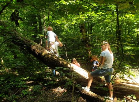 Grădinița în pădure: cum a decurs prima săptămână