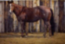 Horses-28_edited.jpg