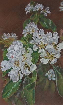 Alison's phone pear blossom 2 002.jpg