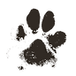 muddy paw2.png