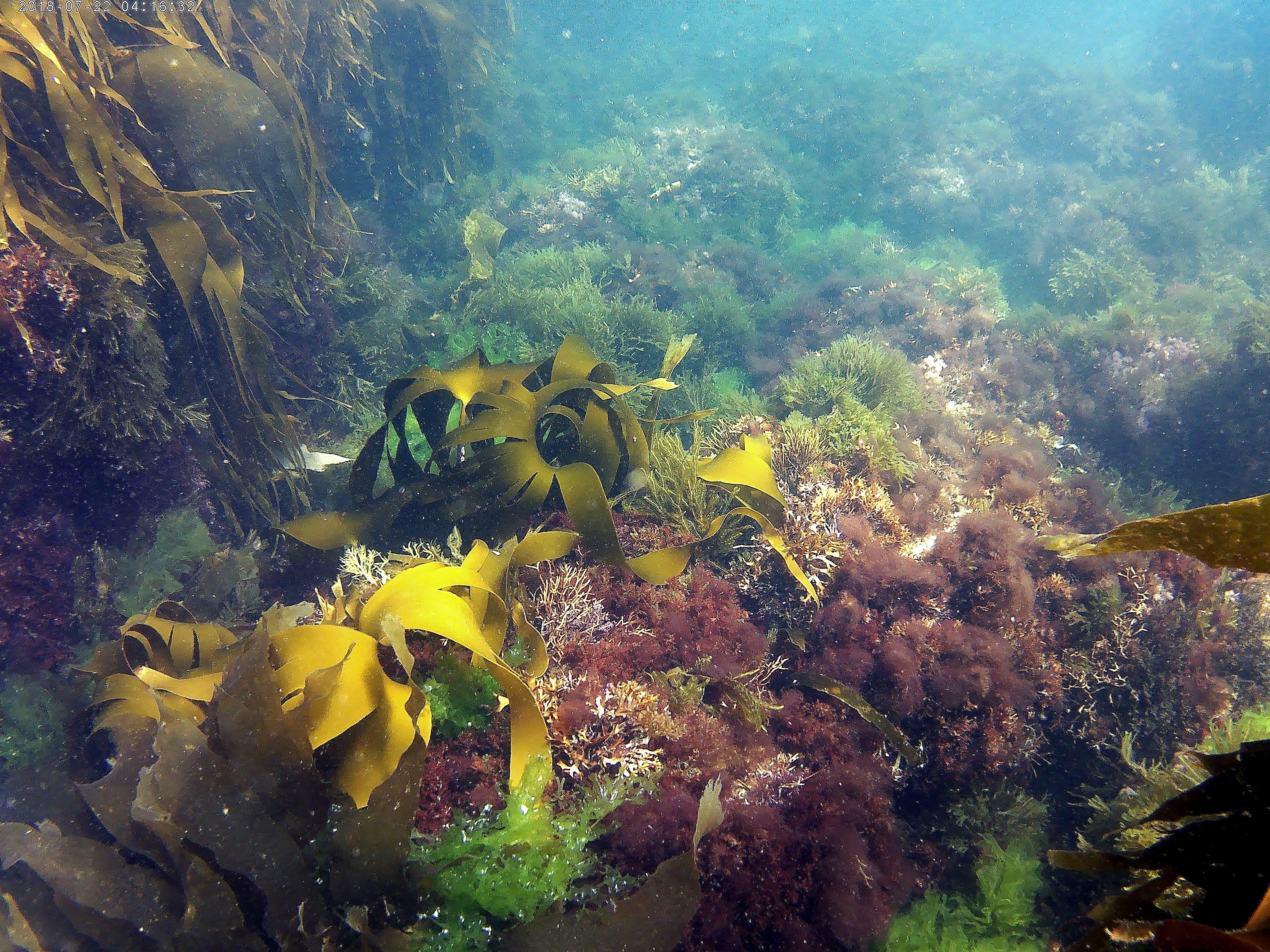 La faune sous-marine