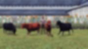 bovine!.png