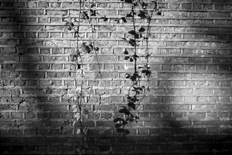 wall bw (2)