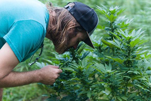 hemp-grower-with-plants