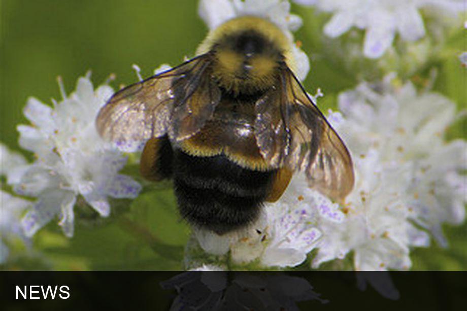 Trump delays bee listing