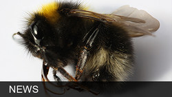 Now Trump's Going After bees