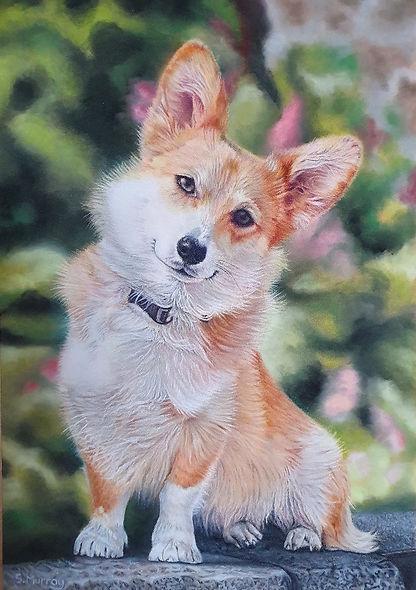 Image of dog portrait Brodie