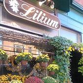 Lilium Florist