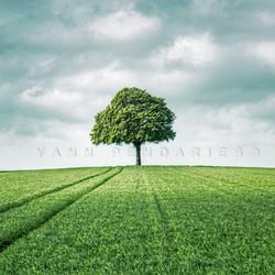 My Tree, My roots printemps N°3