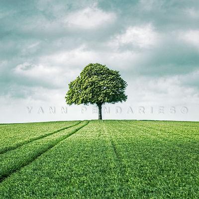 série photographie artistique paysages de nature et d'arbres, paysage printemps