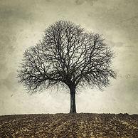 photographies d'arbres, photographie de nature