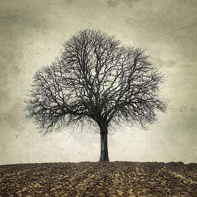 série photographie artistique paysages de nature et d'arbres, paysage de champs en hiver