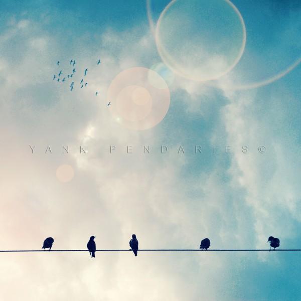 Les oiseaux N°1