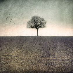 My Tree, My roots Hiver N°1