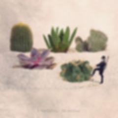 L'épilateur de cactus.jpg