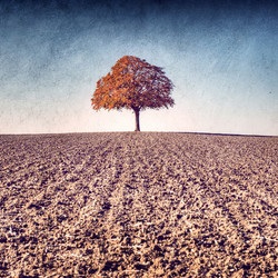 My Tree, My roots Automne N°1