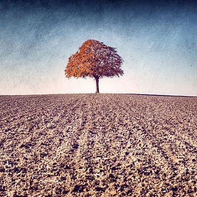 série photographie artistique paysages de nature et d'arbres, paysage d'automne
