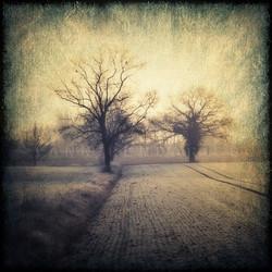 My Tree, My roots N°1
