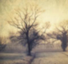 série photographie artistique paysages de nature et d'arbres, paysage d'hiver Beaujolais
