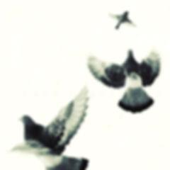 série photographie artistique paysages en noir et blanc, Les oiseaux, les pigeons de Paris
