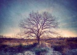 My Tree, My roots N°13