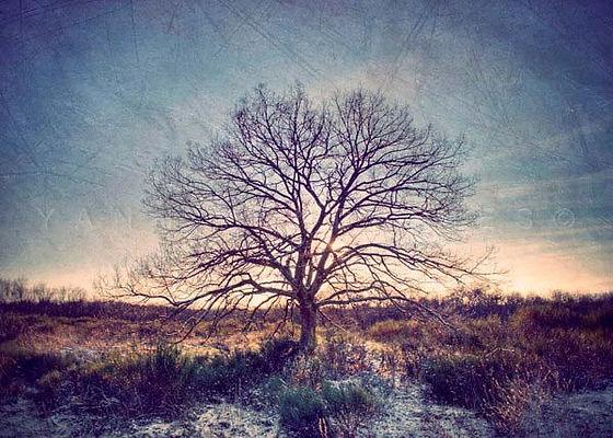 série photographie artistique paysages de nature et d'arbres, paysage d'hiver