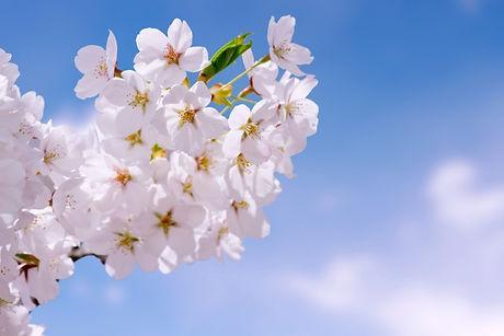 SakuLifeイメージ画像
