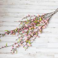 Pink Spring Flower Buds