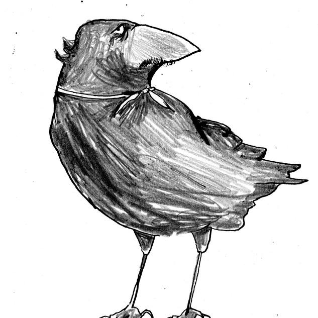 Allan Poe the Crow