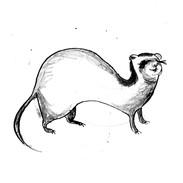 Fenella Ferret