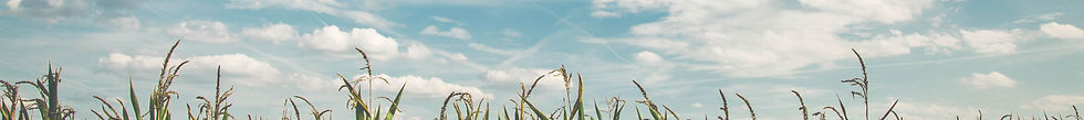 pexels-pixabay-158827_edited.jpg