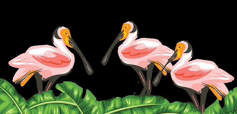 Tropical Audubon Society Give Miami Day 2020